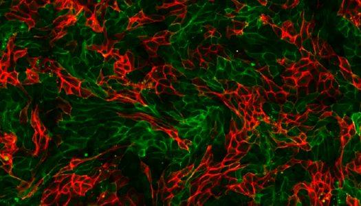Mapa das células humanas